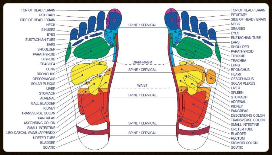 Knead a Back Foot Reflexology